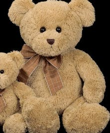 Bensen the Plush Teddy Bear