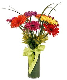 Our classic design contains 6 gerberas, our deluxe design contains 10 gerberas and our grand design contains 15 gerbera