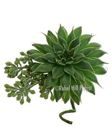 Our succulent corsage and boutonniere are available individually or as a matched set.