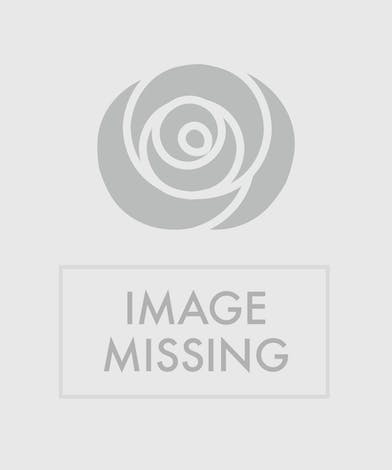 Lovely Holiday Bouquet of Roses and White Hydrangea