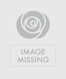 Lavender de Provence