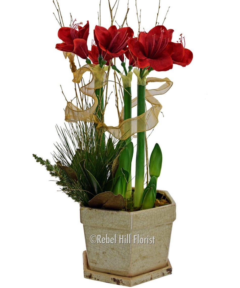 Triple Amaryllis Nashville Tn Florist Same Day Flower Delivery