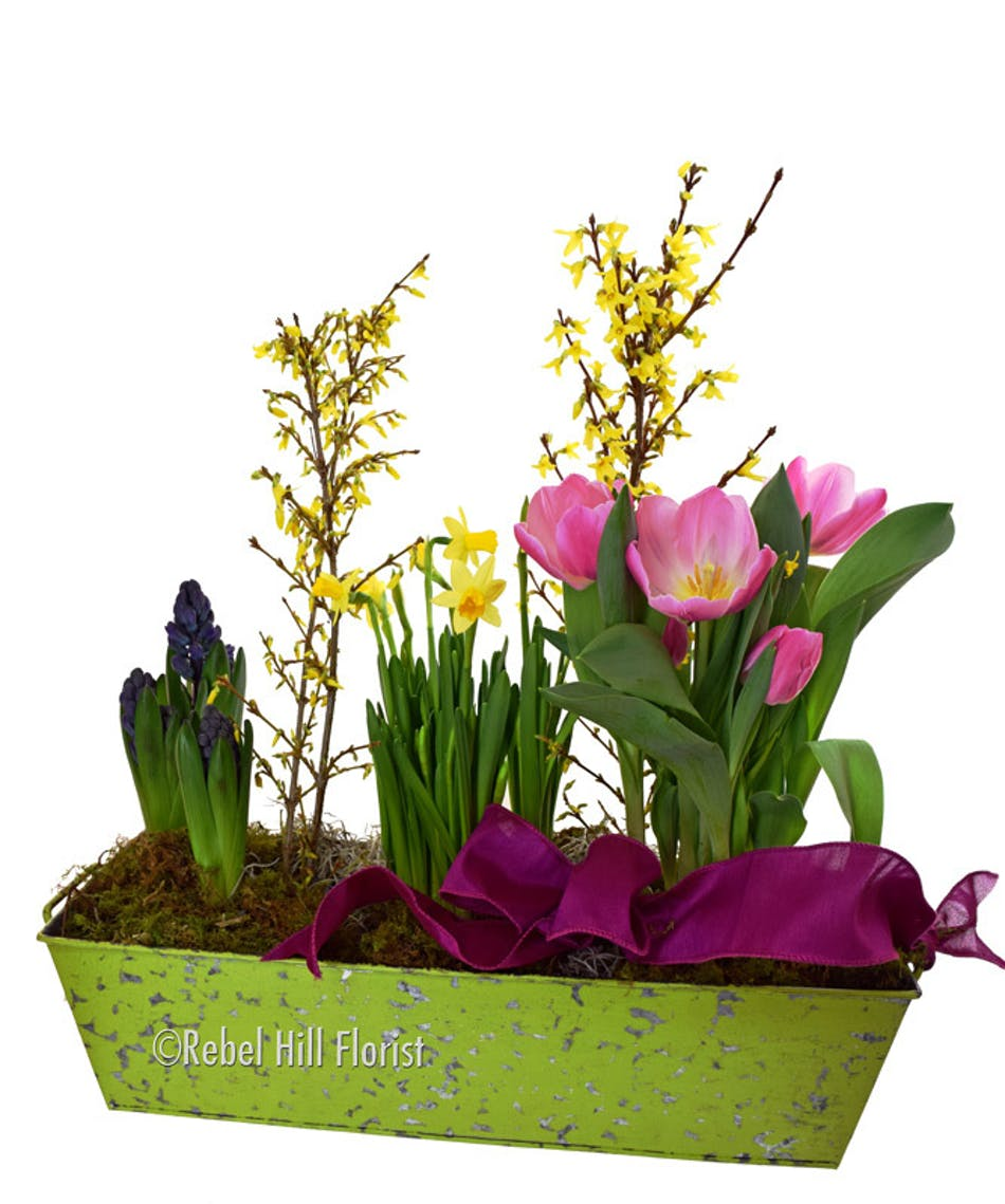 Flower delivery spring hill tn image collections flower decoration spring bulb garden nashville tn florist same day flower delivery spring bulb garden nashville tn florist mightylinksfo Images