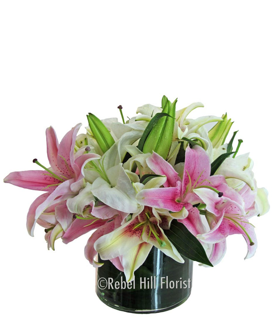 Simply Fragrant And Beautiful Over A Dozen Lily Blooms Nashville