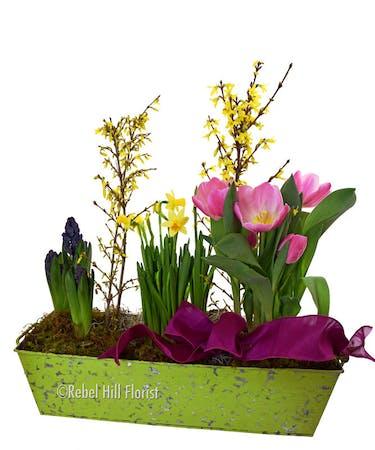Spring Bulb Barden Same Day Nashville Flower Delivery