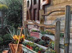 Outdoor flowers and plants on display in our wooden planters